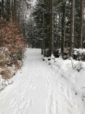 Wanderung Fuschlsee Rundwanderweg Bild 4