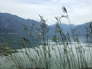 Badeplatz Seezugang Misling Bild 3